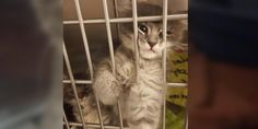 Kitten Found Abandoned on Roadside Reaches Out to Woman, Asking to Be Adopted.. - Love Meow