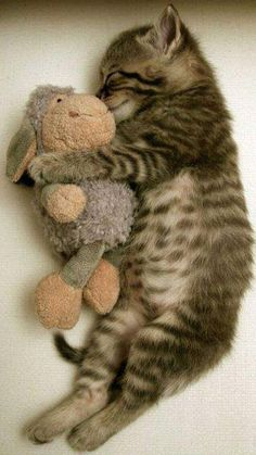 tiny pet with knitted toy, it counts!