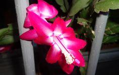 flor de seda rosa
