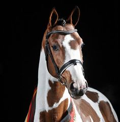 Jan, I want a horse from you. (My endless list of favorite horses. Swiss Made)