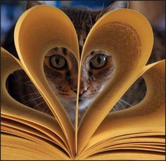 """^ """"What's an altered book?"""" ♥ (I love cats and kittens. Funny Cats, Funny Animals, Cute Animals, Crazy Cat Lady, Crazy Cats, Kittens Cutest, Cats And Kittens, Animal Gato, Photos Of Eyes"""