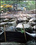 Zayante Creek Bioengineered Willow Wall