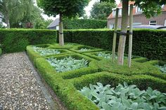 Simple beauty with Stachys and Buxus, Acer and Taxus in garden of designer Louise van den Akker Ornamental Plants, Foliage Plants, Formal Gardens, Small Gardens, Formal Garden Design, Pinterest Garden, Landscaping Plants, Topiary, Garden Styles