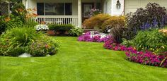 16 Effective Lawn Care and Maintenance Tips