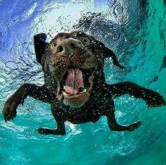 Underwaterdog :-)