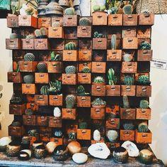 Een vintage industriële oude ladekast met de benodigde corrosie, Met daar in tientallen cactus soorten!greenthumbup
