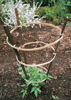 Tomato hoops based on a drawing from a garddening book support the crop at the Old Salem Moravian village in Winston-Salem, North Carolina. Tomato Trellis, Tomato Cages, Garden Trellis, Cottage Garden Design, Cottage Garden Plants, Garden Art, Landscaping Tips, Garden Landscaping, Tomato Support