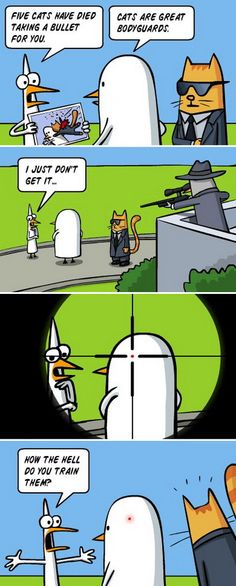 Why cats make good bodyguards