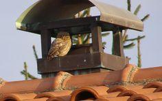 Civette in città - Owl http://lefotodiluisella.blogspot.it/