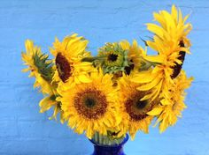hillenhomesteadLoving these sunflowers from // July Flowers, Summer Special, Sunflowers, Special Events, Maya, Seeds, Bloom, Plants, Garden