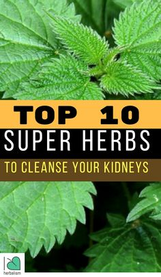 As you might recognize, kidneys are among our most important body organs, and they help refine every little thing you put into your system (food, alcohol, medications, and so on). Here are top 10 super herbs to cleanse your kidneys.