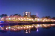 444:「乙川に反射する桜並木」@岡崎公園