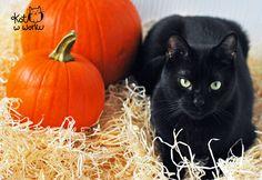 Szalom #blackcat #halloween #cat #kot #czarnykot #dynia #pumpkin