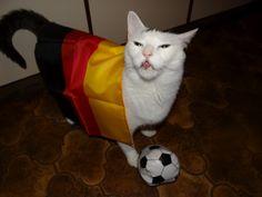 Deutsche Fußballkatze - Sandra Deutchmann