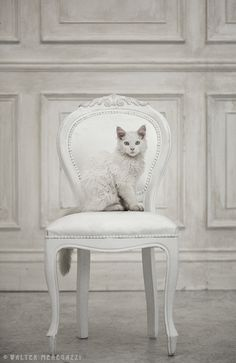 ☼ Midday Visions ☼ dreamy light & white art & photography - his royal catness