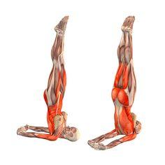 Unsupported shoulderstand, hands behind back - Niralamba Sarvangasana with hands behind back - Yoga Poses | YOGA.com