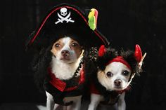 Halloween dog parade in New York - Photo 1 - Pictures - CBS News