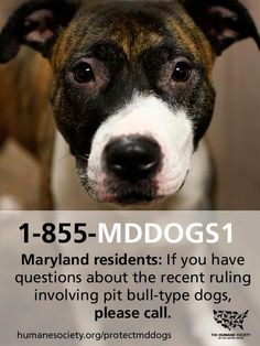 "MARYLAND: The Humane Society of the United States has launched a helpline for anyone with questions about the recent court ruling in Maryland involving ""pit bull"" dogs. Please call the Protect Maryland Dogs Helpline: 1-855-MDDOGS1"