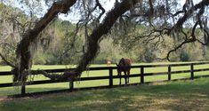 Boone Hall Plantation Charleston, SC