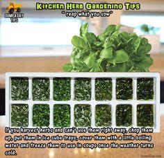 Dump A Day Amazing Kitchen Herb Garden Tips - 20 Pics