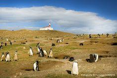 MAGDALENA ISLAND penguins, Patagonia