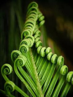 Green Ferns on Black Background