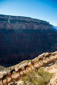 What to do when you only have 4 hours to explore the Grand Canyon South Rim.