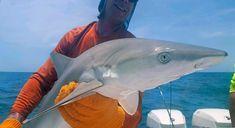 Fishing Charters on Anna Maria Island, Siesta key and Sarasota. Anna Maria Island, Siesta Key, Fishing Charters, Anna Marias, Best Fishing, Places To Go, Favorite Things, Coast