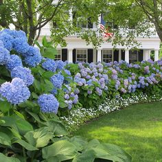 Easily change the color of your hydrangea flowers by changing the soil's Ph. Check these details of how to change hydrangea colors and enjoy the color show! Hortensia Hydrangea, Hydrangea Colors, Hydrangea Care, Hydrangeas, Hydrangea Season, Hydrangea Landscaping, Home Landscaping, Front Yard Landscaping, Southern Landscaping