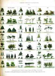 Vintage Tree Identification Chart.
