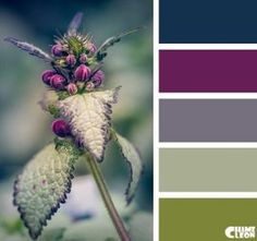 With a highland feel these thistle colours bring warmth to any colour palette. Colour Pallette, Color Palate, Colour Schemes, Color Combos, Color Patterns, Paint Schemes, Winter Colour Palette, Office Color Schemes, Good Color Combinations