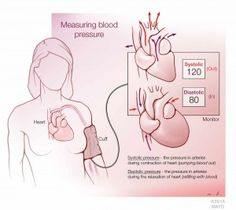 10 Appreciate ideas: How To Take Blood Pressure hypertension diet salts.Hypertension Yoga Blood Pressure how to check blood pressure tips.How To Check Blood Pressure Tips. Hypertension Blood Pressure, What Is Blood Pressure, Blood Pressure Range, Blood Pressure Numbers, Increase Blood Pressure, Pulmonary Hypertension, Blood Pressure Remedies, Heart Pumping Blood