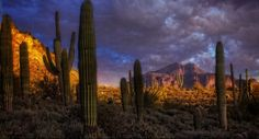 Photograph Stormy Desert by Randy Dietmeyer on 500px