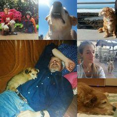 Senza Ciri, sorellina a quattro zampe. Il ricordo della famiglia :http://www.qualazampa.news/2018/04/05/senza-ciri-sorellina-a-quattro-zampe-il-ricordo-della-famiglia/