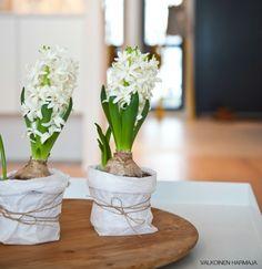 hyacint-papieren-zakje