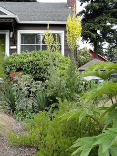 Keep Lawn & Garden Green While Conserving Water