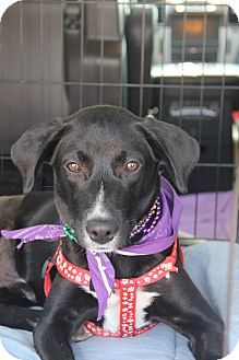 37 Best Natchitoches Humane Society Adoptables Images Pet