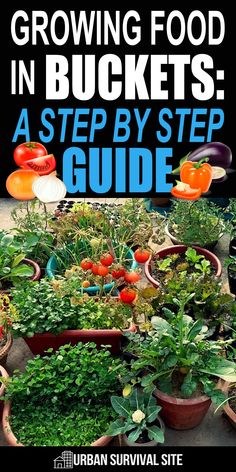 636 Best Container Vegetable Gardens Images In 2020 Vegetable