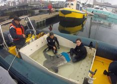 Loaded into the boat Aquarium aquarists Simon and Leigh keep the sunfish calm and ensure it receives enough oxygen. Ocean Aquarium, Feel Good News, Uplifting News, Good News Stories, Cape Town South Africa, Atlantic Ocean, Great Places, Holi, Around The Worlds