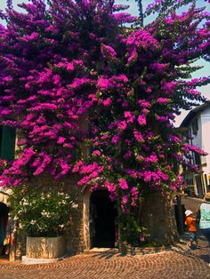 Isn't this stunning? Taken in Sirmione today.