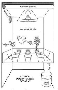 How to Grow Marijuana Indoors, Growing marijuana indoors, grow room, cannabis