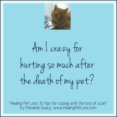 """Healing Pet Loss - 10 tips for coping with the loss of a pet"" - see more: http://healingpetloss.com/pet-loss-book/"