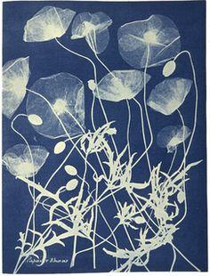 A cyanotype, also called a sun print or blueprint, circa 1850, by British botanist Anna Atkins, 1797-1871