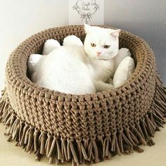 22 Ideas For Crochet Cat Accessories Yarns Cat Accessories, Knitting Accessories, Chat Crochet, Diy Dog Bed, Diy Bed, Dog Sweaters, T Shirt Yarn, Pet Beds, Diy Stuffed Animals