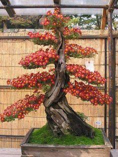 Bonsai Trees Http:Vur.Metbwbonsai-Tree-Secrets Great Examples Of Different Styles Of Bonsai - Good Reference Ikebana, Bonsai Plants, Bonsai Garden, Bonsai Trees, Succulents Garden, Air Plants, Cactus Plants, Trees And Shrubs, Trees To Plant