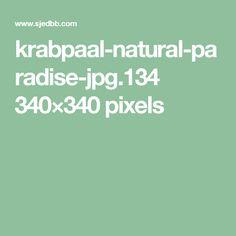 krabpaal-natural-paradise-jpg.134 340×340 pixels