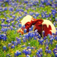 Take time to smell the bluebonnets.  :)