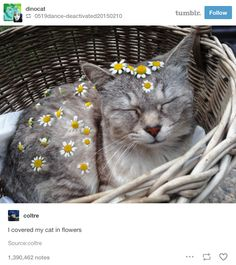 19 Tumblr Posts That Prove Cats Are Actually Perfect