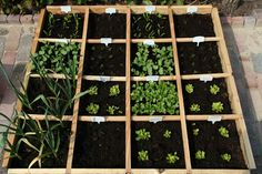 fun idea for the kids own lil veggies garden