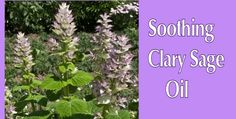 SHARING IS CARING!4380170Surrounds Body and Mind With Relief Clary sage oil is one of the best essential oils for balancing women's hormones at all ages. It improves menstrual pain, improves PMS and regulates the menstrual cycle. At the same time, it also helps hot flashes and other menopausal disturbances. Adding it to coconut oil or …